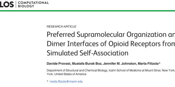 Preferred Supramolecular Organization and Dimer Interfaces of Op